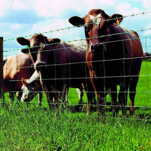 Ограждения для животных из сетки рабицы или ДФЛ